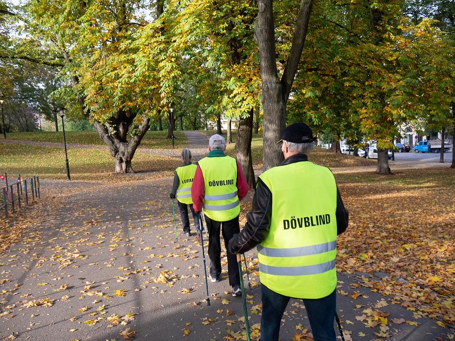 tre personer med reflexvästar går i parken med stavar, bilden tagen bakifrpn, på västarna står texten LEDARE eller DÖVBLIND. Träden är höstgula och solen skiner,.